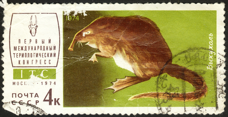 postmail: MOSCOW, RUSSIA - DECEMBER, 2015: a post stamp printed in the USSR shows an animal with the inscription Desmana moschata, the series The 1st Theriological Congress, circa 1974