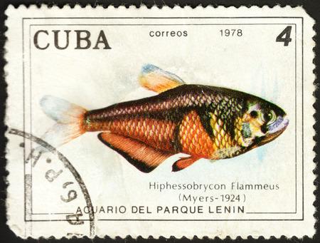 hyphessobrycon: MOSCOW, RUSSIA - DECEMBER, 2015: a post stamp printed in CUBA shows a fish Hyphessobrycon flammeus, the series Fish in Lenin Park Aquarium, Havana, circa 1978 Editorial