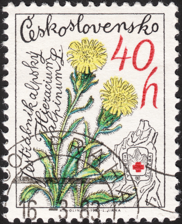 hawkweed: MOSCOW, RUSSIA - JANUARY, 2016: a post stamp printed in CZECHOSLOVAKIA shows a flower with the inscription Hieracium alpinum, the series The 25th Anniversary of Mountain Rescue Service, circa 1979
