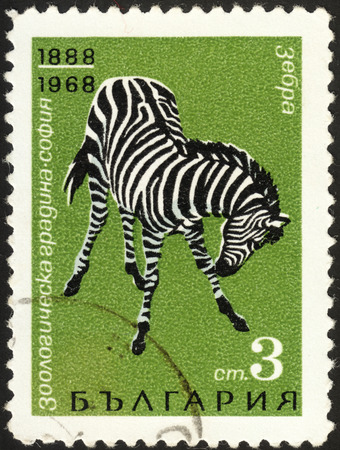 MOSCOW, RUSSIA - DECEMBER, 2015: a post stamp printed in BULGARIA shows a zebra (Equus quagga), the series The 80th Anniversary of the Sofia City Zoo, circa 1968 Editorial