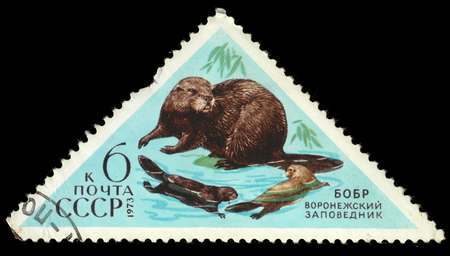 reserves: USSR - CIRCA 1973: a post stamp printed in the USSR shows an animal with the inscription Beaver, the series Fauna - Nature Reserves, circa 1973 Editorial