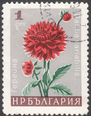 phytology: MOSCOW, RUSSIA - CIRCA JANUARY, 2016: a post stamp printed in BULGARIA shows a flower with the inscription Dahlia variabilis, the series Garden Flowers, circa 1966