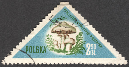 campestris: MOSCOW, RUSSIA - CIRCA JANUARY, 2016: a post stamp printed in POLAND shows a mushroom Psalliota campestris, the series Mushrooms, circa 1959 Editorial