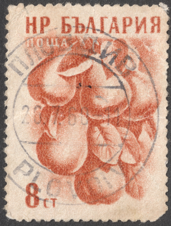 pyrus: MOSCOW, RUSSIA - CIRCA JANUARY, 2016: a post stamp printed in BULGARY shows Pyrus domestica fruit, the series Fruit - New Colors, circa 1957