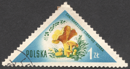 cantharellus cibarius: MOSCOW, RUSSIA - CIRCA JANUARY, 2016: a post stamp printed in POLAND shows a mushroom Cantharellus cibarius, the series Mushrooms, circa 1959