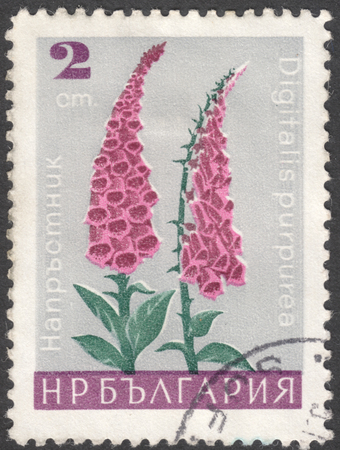 phytology: MOSCOW, RUSSIA - CIRCA JANUARY, 2016: a post stamp printed in BULGARIA shows a flower with the inscription Digitalis purpurea, the series Garden Flowers, circa 1966
