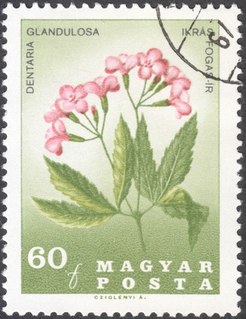 pal: MOSCOW, RUSSIA - JANUARY, 2016: a post stamp printed in HUNGARY shows a portrait of Pal Kitaibel and Dentaria glandulosa, the series The 150th Anniversary of the Death of Pal Kitaibel, circa 1967 Editorial