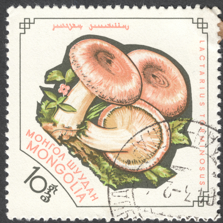 milkcap: MOSCOW, RUSSIA - JANUARY, 2015: a post stamp printed in MONGOLIA shows a mushroom with the inscription Lactarius torminosus, the series Fungi, circa 1964