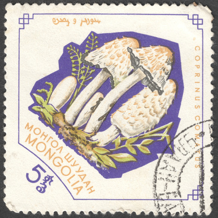 torminosus: MOSCOW, RUSSIA - JANUARY, 2015: a post stamp printed in MONGOLIA shows a mushroom with the inscription Coprinus comatus, the series Fungi, circa 1964