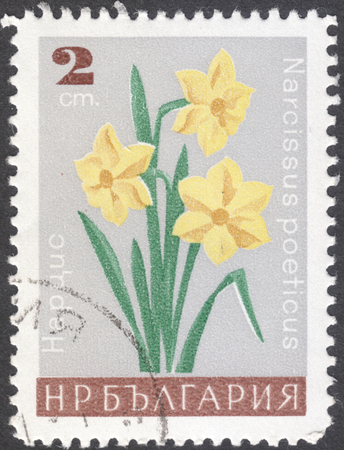 phytology: MOSCOW, RUSSIA - CIRCA JANUARY, 2016: a post stamp printed in BULGARIA shows a flower with the inscription Narcissus poeticus, the series Garden Flowers, circa 1966