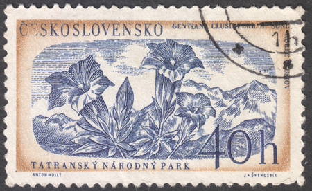 frondage: MOSCOW, RUSSIA - JANUARY, 2016: a post stamp printed in CZECHOSLOVAKIA shows a plant Gentiana clusii, the series Flora & Fauna - Tatra National Park, circa 1957