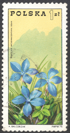 postmail: MOSCOW, RUSSIA - CIRCA JANUARY, 2016: a post stamp printed in POLAND shows a spring gentian (Gentiana verna) flower, the series Tourism - mountain guides, circa 1975