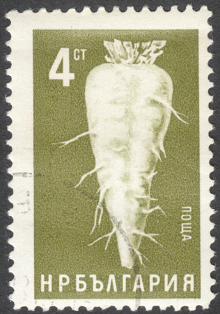 postage stamp: MOSCOW, RUSSIA - CIRCA JANUARY, 2016: a post stamp printed in BULGARIA shows Beta vulgaris var. altissima beetroot, the series Agricultural Products, circa 1965