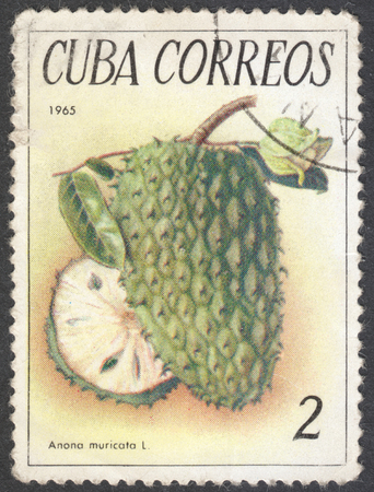 anona: MOSCOW, RUSSIA - JANUARY, 2016: a post stamp printed in CUBA shows a fruit Annona reticulata, the series Tropical fruits, circa 1965