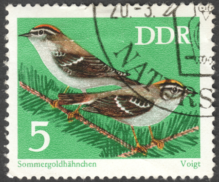 ddr: MOSCOW, RUSSIA - CIRCA JANUARY, 2016: a post stamp printed in DDR shows birdrs Regulus ignicapillus, the series Protected Songbirds, circa 1973