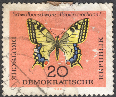 machaon: MOSCOW, RUSSIA - CIRCA JANUARY, 2016: a post stamp printed in DDR shows a butterfly with the inscription Papilio machaon, the series Butterflies, circa 1964