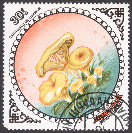cantharellus: MOSCOW, RUSSIA - JANUARY, 2016: a post stamp printed in MONGOLIA shows a mushroom with the inscription Cantharellus cibarius, the series Fungi, circa 1985