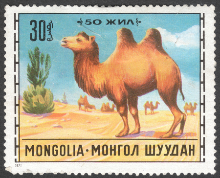camel post: MOSCOW, RUSSIA - JANUARY, 2016: a post stamp printed in MONGOLIA shows a camel, the series Livestock Breeding, circa 1971 Editorial