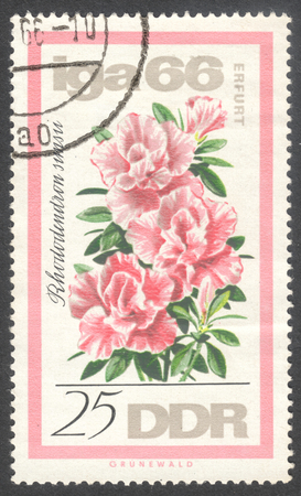 ddr: MOSCOW, RUSSIA - JANUARY, 2016: a post stamp printed in DDR shows a flower Rhododendron simsii, the series International Garden Exhibition in Erfurt, circa 1966