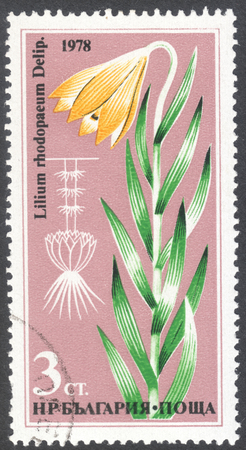 postmail: MOSCOW, RUSSIA - CIRCA JANUARY, 2016: a post stamp printed in BULGARIA shows a flower Lilium rhodopaeum, the series Flowers, circa 1978 Editorial
