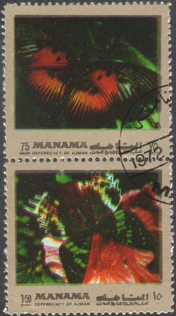 rhamni: MOSCOW, RUSSIA - CIRCA FEBRUARY, 2016: a post stamp printed in Ajman shows butterflies, the series Butterflies, circa 1972