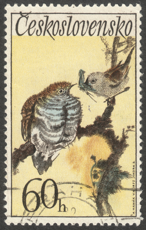 postmail: MOSCOW, RUSSIA - CIRCA MAY, 2016: a post stamp printed in CZECHOSLOVAKIA  shows a Cuculus canorus bird, the series Songbirds, circa 1972