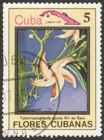 MOSCOW, RUSSIA - CIRCA MAY, 2016: a post stamp printed in CUBA shows Tabernaemontana apoda flower, the series Flora and Fauna - Flowers, circa 1983