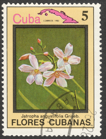 estampilla: MOSCOW, RUSSIA - CIRCA MAY, 2016: a post stamp printed in CUBA shows Jatropha angustifolia flower, the series Flora and Fauna - Flowers, circa 1983
