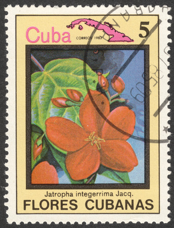 malpighiales: MOSCOW, RUSSIA - CIRCA MAY, 2016: a post stamp printed in CUBA shows Jatropha integerrima flower, the series Flora and Fauna - Flowers, circa 1983 Editorial