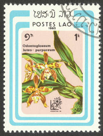 MOSCOW, RUSSIA - CIRCA MAY, 2016: a post stamp printed in LAOS shows Odontoglossum luteo-purpureum orchid, the series Stamp Exhibition Argentina 85 Buenos Aires, Argentina - Orchids, circa 1985
