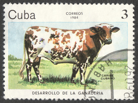 bos: MOSCOW, RUSSIA - CIRCA JUNE, 2016: a post stamp printed in CUBA shows a Caribbean Cattle (Bos primigenius taurus) cow, the series Development of cattle-breeding, circa 1984