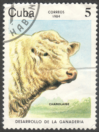 bos: MOSCOW, RUSSIA - CIRCA JUNE, 2016: a post stamp printed in CUBA shows a Charolais (Bos primigenius taurus) cow, the series Development of cattle-breeding, circa 1984