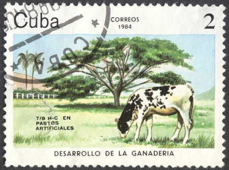 bos: MOSCOW, RUSSIA - CIRCA JUNE, 2016: a post stamp printed in CUBA shows a Cattle (Bos primigenius taurus) cow, the series Development of cattle-breeding, circa 1984