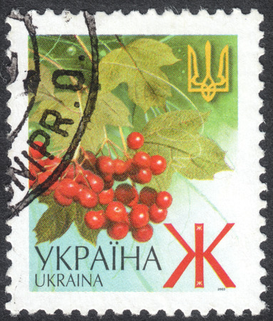 MOSCOW, RUSSIA - CIRCA OCTOBER, 2016: a post stamp printed in UKRAINE shows ashberry and a trident, the Definitive Issue, circa 2003 Editorial