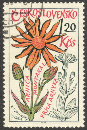 phytology: MOSCOW, RUSSIA - CIRCA OCTOBER, 2016: a stamp printed in CZECHOSLOVAKIA shows an Arnica montana flower, the series Medicinal Plants, circa 1965