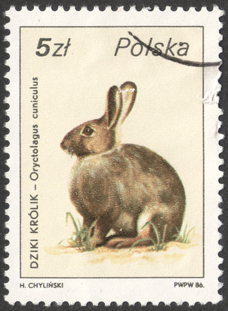oryctolagus cuniculus: MOSCOW, RUSSIA - CIRCA NOVEMBER, 2016: a post stamp printed in POLAND, shows an Oryctolagus cuniculus rabbit, the series Wildlife, circa 1986
