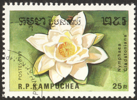MOSCOW, RUSSIA - CIRCA OCTOBER, 2017: a post stamp printed in CAMBODIA shows a flower Cladstoniana, the series Flowers, circa 1989 Editorial