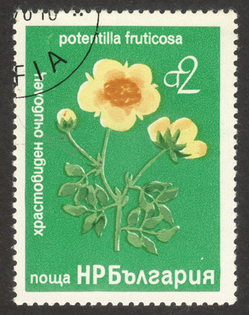 MOSCOW, RUSSIA - CIRCA OCTOBER, 2017: a post stamp printed in BULGARIA shows Potentilla fruticosa plant, the series Tree and shrub flowers, circa 1976