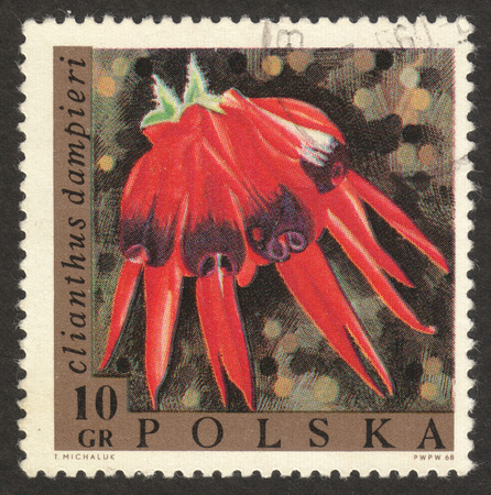 MOSCOW RUSSIA - CIRCA NOVEMBER 2017: a post stamp printed in POLAND shows Clianthus dampieri flower, the series The exotic flowers, circa 1968 Редакционное