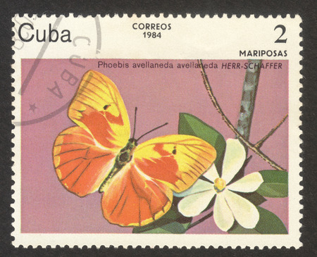 MOSCOW RUSSIA - CIRCA NOVEMBER 2017: a post stamp printed in CUBA shows Red-splashed Sulphur (Phoebis avellaneda) butterfly, the series The butterflies,circa 1984