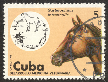 MOSCOW RUSSIA - CIRCA NOVEMBER 2017: a post stamp printed in CUBA shows a horse, the series Veterinary Medicine, circa 1975