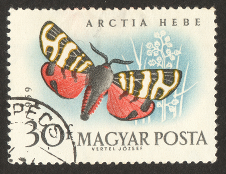 MOSCOW RUSSIA - CIRCA NOVEMBER 2017: a post stamp printed in HUNGARY shows Banded Tiger (Arctia festiva) butterfly, the series The butterflies, circa 1959