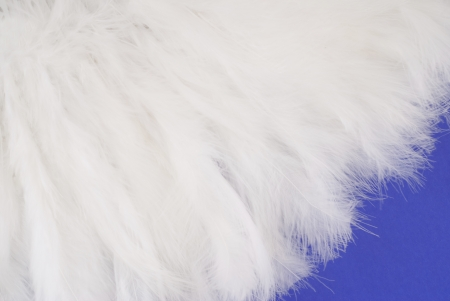 animal sexy: Feathers