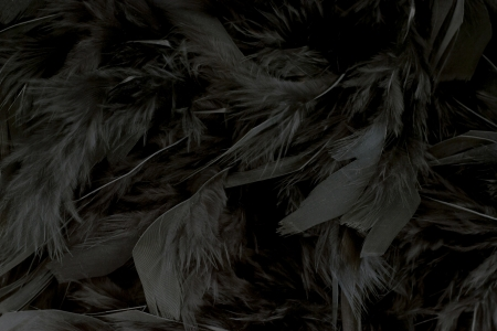 Feathers Stock Photo - 24421845