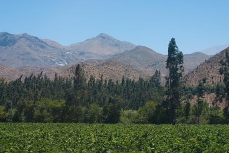 vineyard plain: Landscape of Chile
