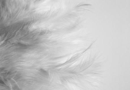 white feathers photo