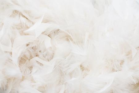 white feathers Standard-Bild