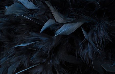 black feather: black feather