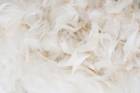 white feathers Stok Fotoğraf