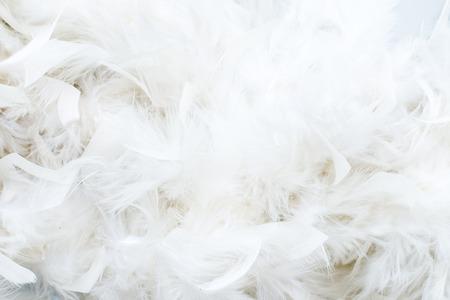 pluma: plumas blancas